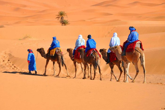 Camel Trekking adventure in the Sahara